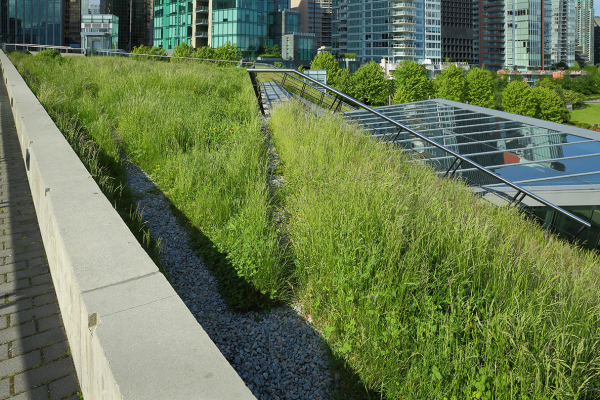 Can Green Roofs Help Cities Respond to Climate Change?