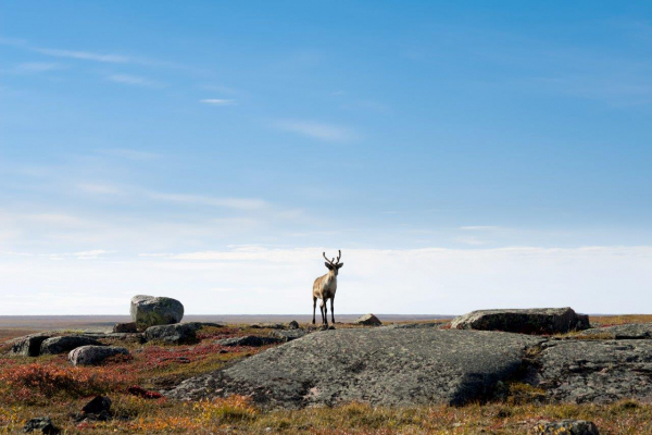 The Buck Stops Here: How to Pay for Species at Risk Conservation in Canada