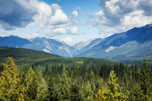 Municipal Natural Assets Initiative | Results from the Second National Cohort