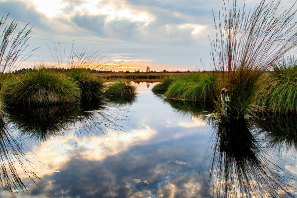 From rhetoric to measurement: The economics of wetland conservation in the Canadian prairies