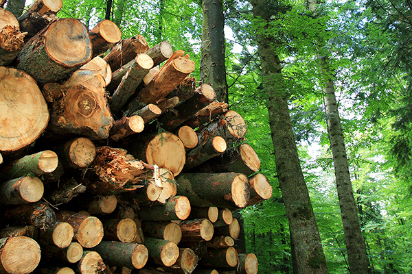 Linking Natural Capital and Productivity – Why the Forest Products Sector is such an interesting case study
